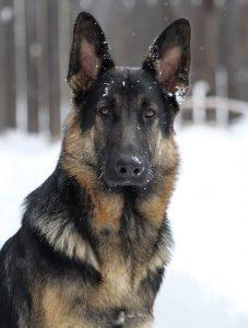 abby dog used cbd for arthritis from grassy knoll